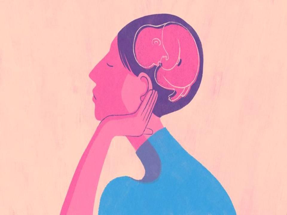 Anne Karnında Beyin Gelişimi