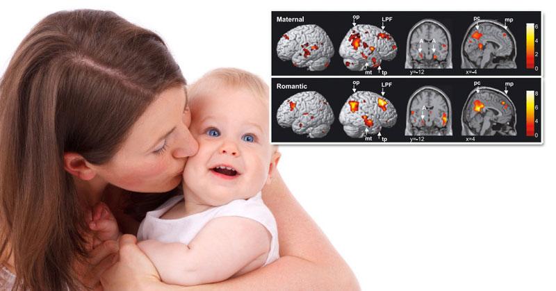 Annelik ve Beyin